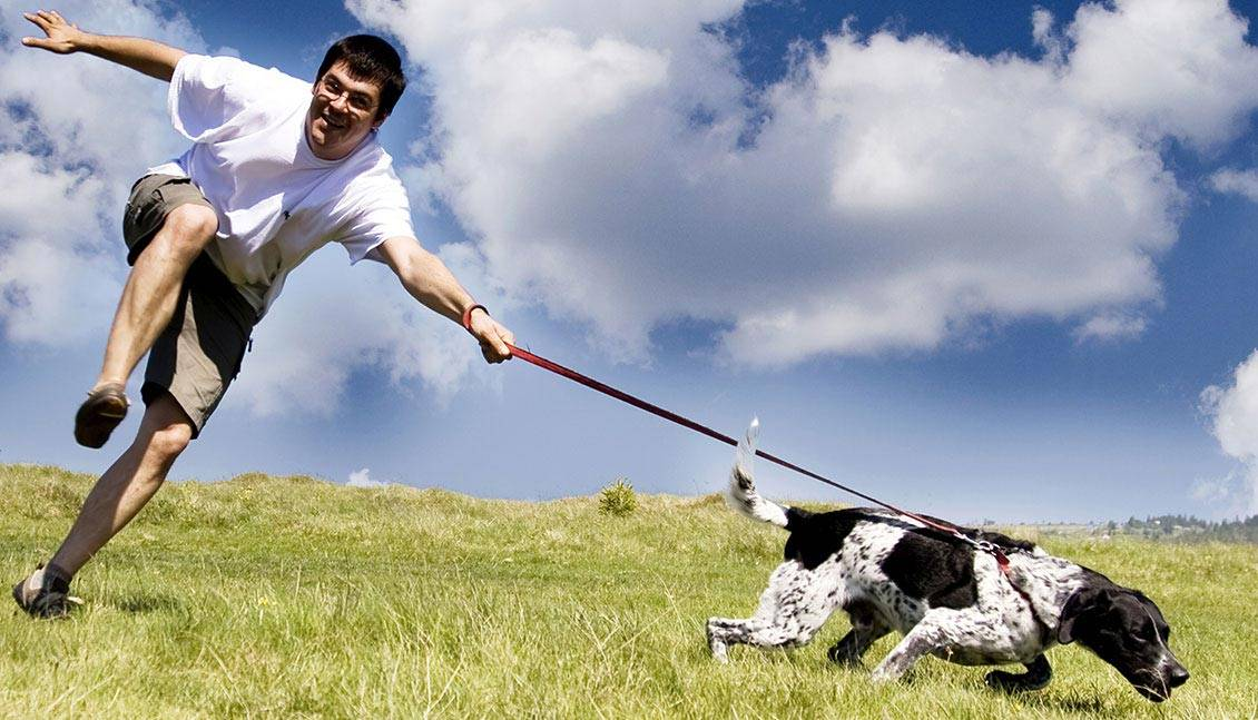 dog training boot camp los angeles